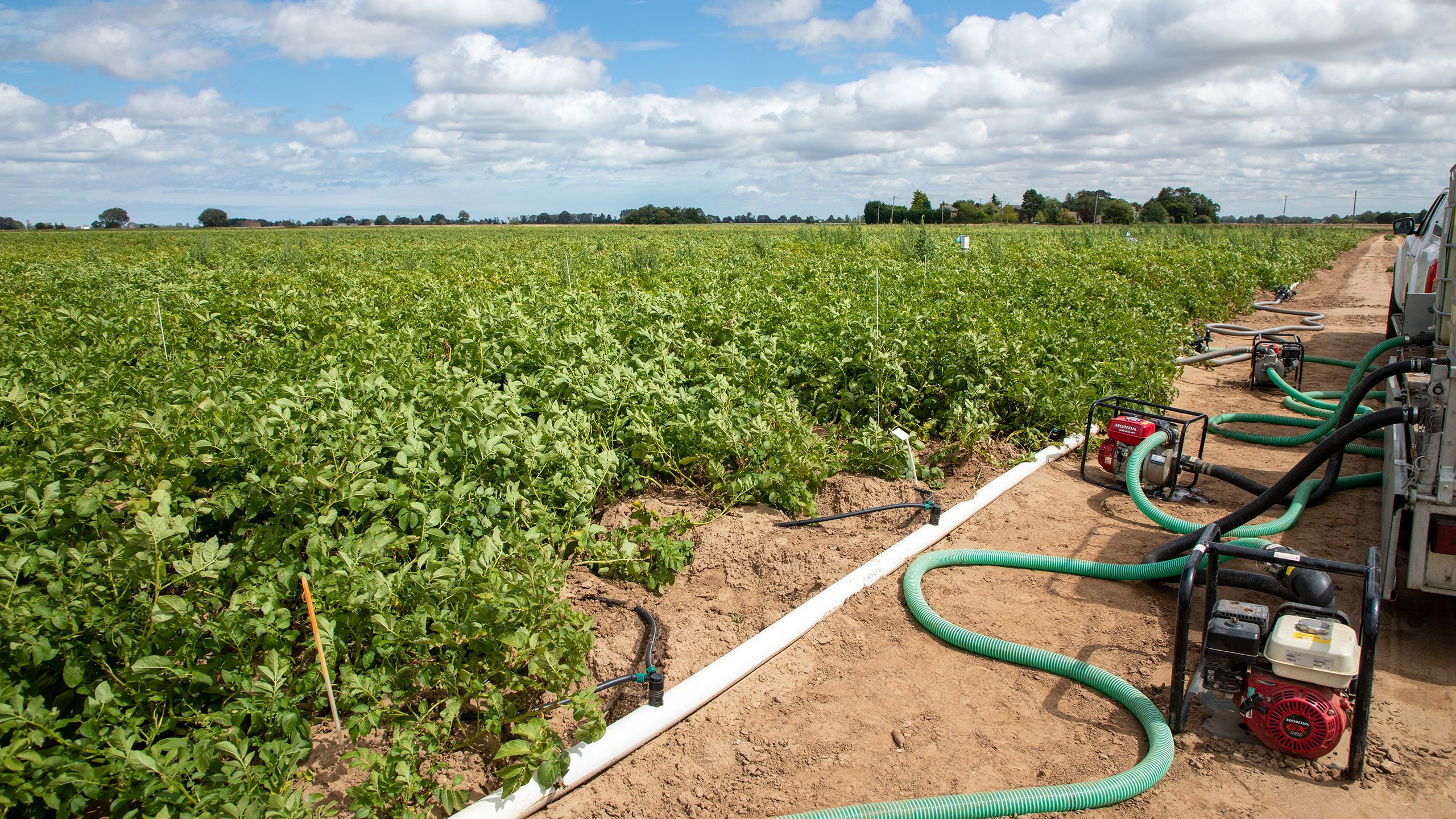 brackish water trials potato crop on the trial site with irrigation equipment courtesy of ahdb